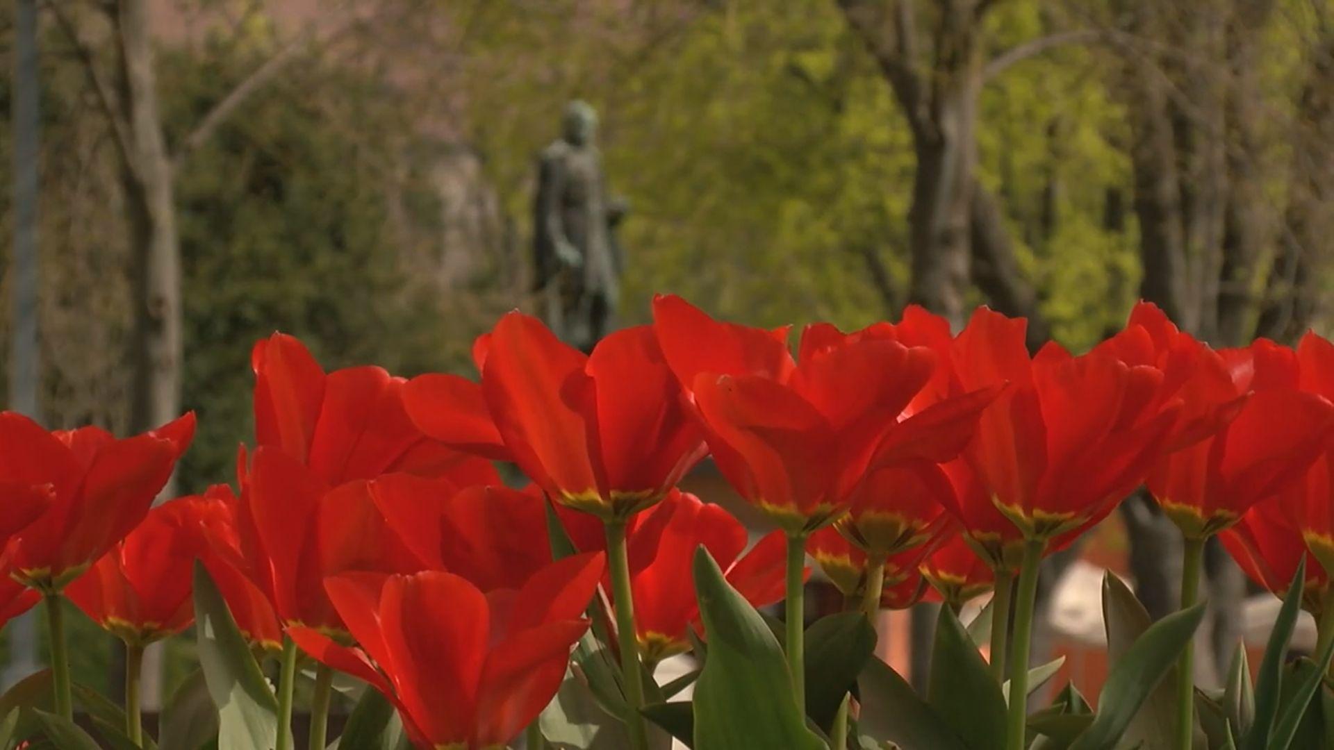 Ismét indul a Virágos Balatonfüredért akció